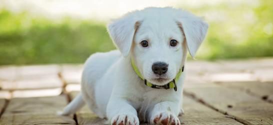 Atendimento Especializado - Dicas Pets 4Ever Shop