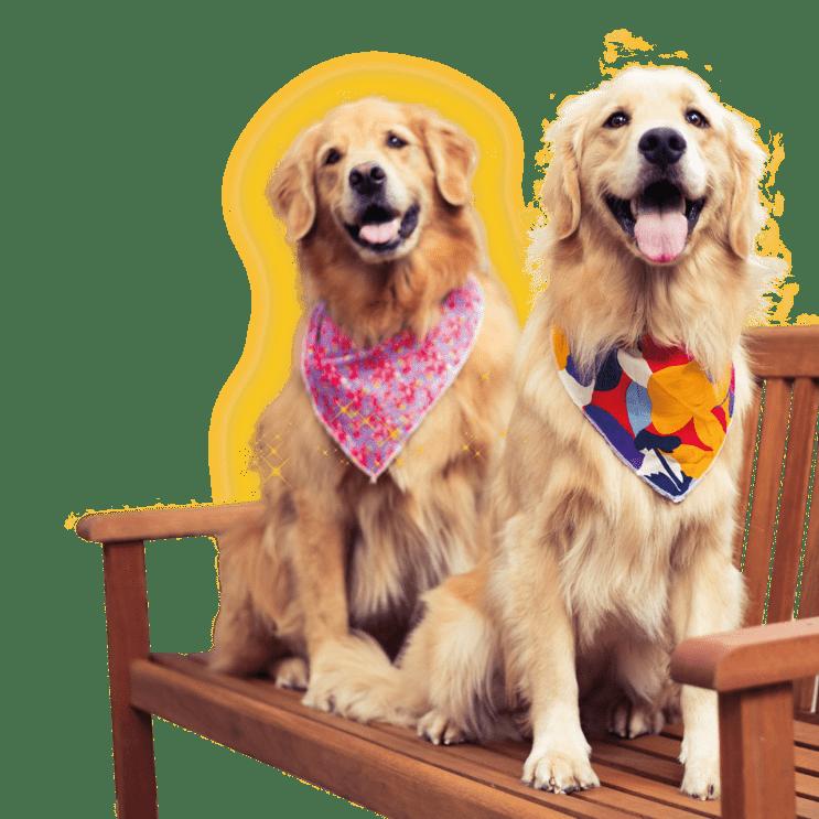 Pets 4Ever Shop - Capa