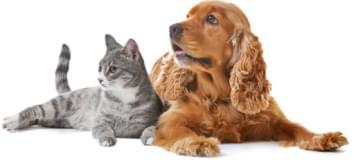 Motivos para você escolher a Pets 4Ever Shop