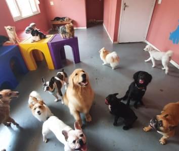 Galeria DayCare e Hotel Pets 4Ever