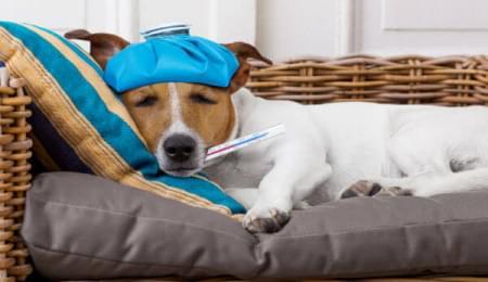 Medicamentos para o seu pet você encontra aqui na Pets 4Ever Shop