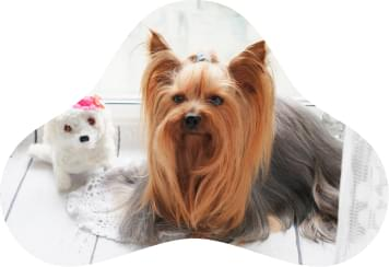 Clínica Veterinária - Pets 4Ever Shop