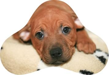 DayCare & Hotel - Pets 4Ever Shop